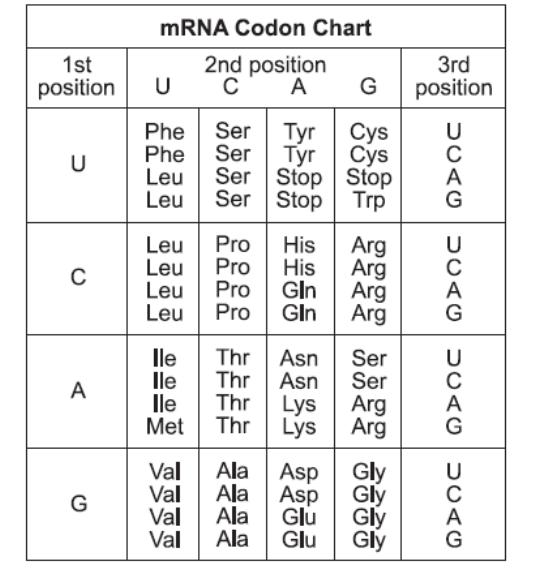 mrna chart: Mrna codon chart png