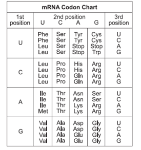 NAME DATE Mutation Worksheet List the two types of mutations